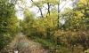 Сад дачи Рубинштейна в Петергофе признали памятником регионального значения