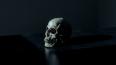 Вместо опят грибник под мхом нашел человеческий череп