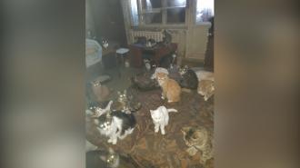 На Стрельнинском шоссе нашли квартиру с десятками кошек