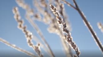 В Ленобласть 4 марта придет похолодание