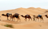 Расцвет криминала: туристические зоны Туниса больше не безопасны