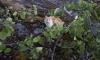 На острове у Ладожского озера нашли одичавшего кота