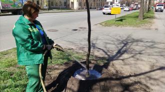 В Кировском районе байкеры и представители ОНФ высадили липы