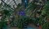 Смольный выберет инвестора оранжерей Таврического сада