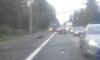 Напротив Жабьего карьера на Мурманском шоссе водитель сбил лося и скрылся