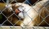 Владелец двух зоопарков в Крыму шантажирует власти и угрожает закрыть зверинцы
