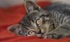 В Ленобласти 14-летний ребенок спас упавшего в колодец кота
