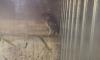 В Петербурге у жестоких продавцов отобрали замученную сову-сипуху