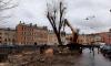 В Петербурге собрался экспертный совет для разрешения спора по сносу тополей