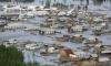 На Дальнем Востоке насчитали более 135 тыс жертв паводка