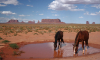 Молодой петербуржец утонул в национальном парке Аризоны