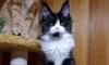 В Петербурге осудили россиянина, укравшего кошку Евангелисту