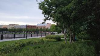В апреле в Петербурге высадили более 5 тыс. деревьев