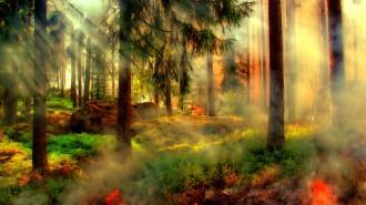 19 лесных пожаров потушено в Ленобласти к началу лета