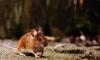 В России создадут мышей для испытания вакцины от COVID-19