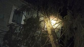 Поваленные после штормового ветра деревья в Петербурге окончательно уберут к 25 декабря