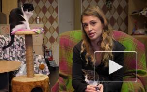 """""""Мы спасли друг друга, как я котов, так и они меня"""": танцовщица пережила депрессию и открыла котокафе"""
