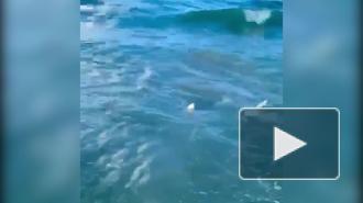 Американский полицейский спас ребенка от акулы