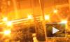 В Архангельске обнаружили плавучую плантацию конопли
