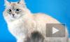 Медведев в Петербурге вновь припомнил «пропажу» кота Дорофея