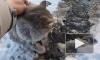 Появилось видео спасенной изо льда кошки в Челябинске