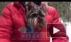 В Петербурге муниципальные власти определят места для выгула собак