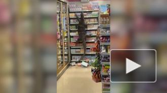 Огромный варан распугал посетителей супермаркета в Таиланде