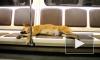 Топ-Метро: Забавные животные в петербургском метрополитене