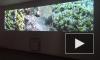 """В Петербурге завершилась выставка исландского видеоарта в рамках """"Послания к человеку"""""""