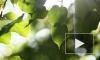 Растения от перегрева защищает красный пигмент каротен