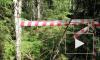 В Подмосковье найдены мертвыми пропавшие супруги-грибники
