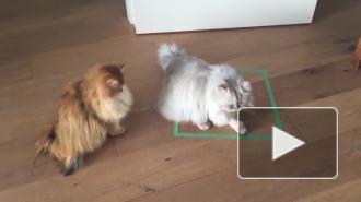 Учёные: кошки любят сидеть не только в реальных, но и в воображаемых коробках