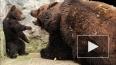 В швейцарском зоопарке убили трехмесячного медвежонка, ...
