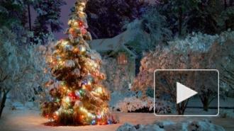 Поздравления с Новым годом 2015 россияне будут получать смсками в прозе и стихах
