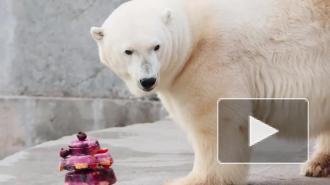 Умерла символ Ленинградского зоопарка — белый медведь Услада