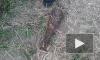 Найденные на причале в Кировском районе 118 снарядов вывезли на полигон