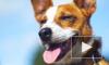 Собачий нос оказался чувствителен к инфракрасному тепловому излучению