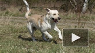 Пьяный петербуржец-садист задушил слепоглухую собаку Тину, а потом трижды ударил ее молотком и один раз ножом