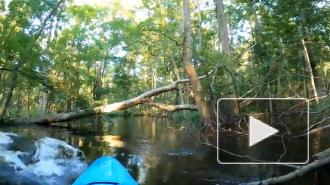Мужчина пережил нападение аллигатора и снял его на видео