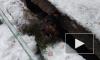 Пермские спасатели вытащили собаку из-под бетонной плиты