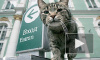 Эрмитаж снова раздает служебных котов