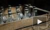 ЗакС поддержал ограничение на продажу алкоголя в дни Кубка конфедераций