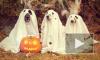 Хэллоуин 2017: пять страшных костюмов для петербуржца