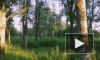 В Южно-Приморском парке Петербурга появилось новое изображение от Loketski