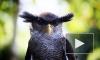 Двух сов отобрали у бездушных фотографов около Исаакиевского собора
