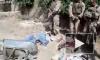 Видео с морпехами США, которые мочатся на трупы талибов, вызвало скандал