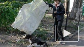 Питерские догхантеры опровергают сообщение об исчезновении своего соратника
