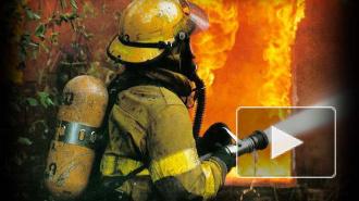 В Петербурге горел жилой дом. Полицейские вытащили людей из пожара до приезда МЧС