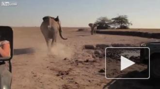 Видео: спасение африканского слоненка в Кении