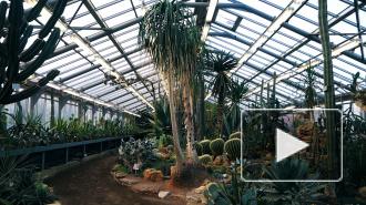 Памяти блокады: спасение Ботанического сада